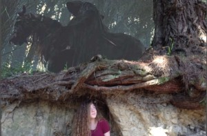 Mt Vic tree iMG_0217 (2) (600 x 395)