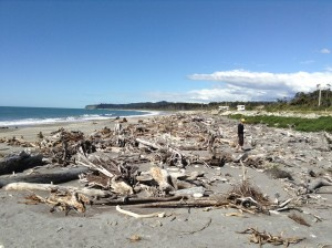 driftwood beach 1 Mini ipad photos 451 (600 x 448)