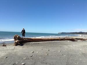 driftwood beach 2 Mini ipad photos 447 (600 x 448)
